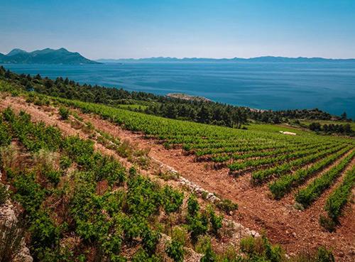 Visite des vignobles de Pelješac